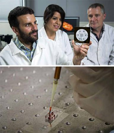 TOP: Dr Volker Nock, Associate Professor Ashley Garrill and Dr Ayelen Tayagui. BOTTOM: A microfluidic chip