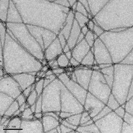 Protein nanofibrils